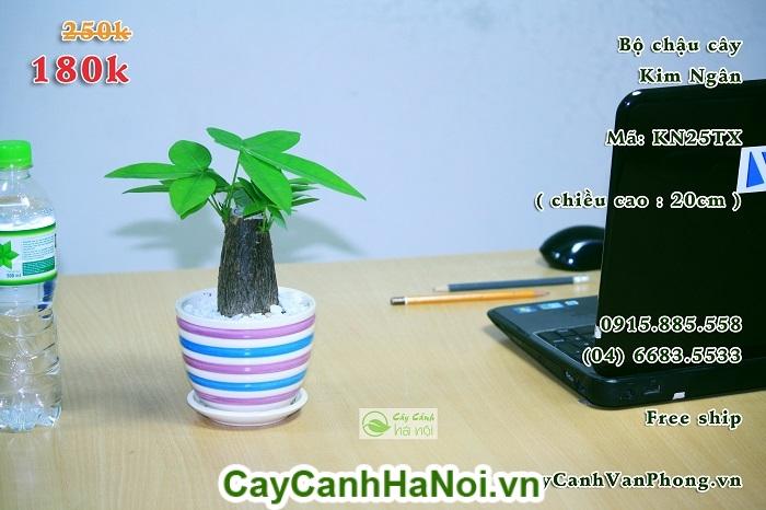Cây Kim Ngân-loài cây mang lại sự may mắn cho gia chủ hình 3