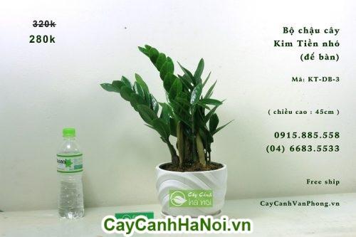 Cây Kim Tiền-loại cây có khả năng lọc sạch không khí đem lại may mắn hình 1