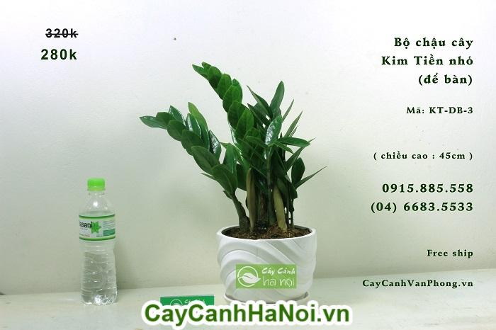 Cây Kim Tiền-loại cây có khả năng lọc sạch không khí đem lại may mắn