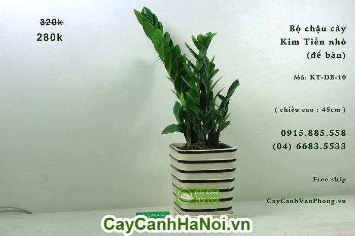 Cây Kim Tiền-loại cây có khả năng lọc sạch không khí đem lại may mắn hình 2