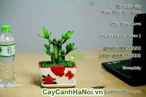 Cây Phát Lộc-loài cây của sự thành công,may mắn và tiền tài hình 2
